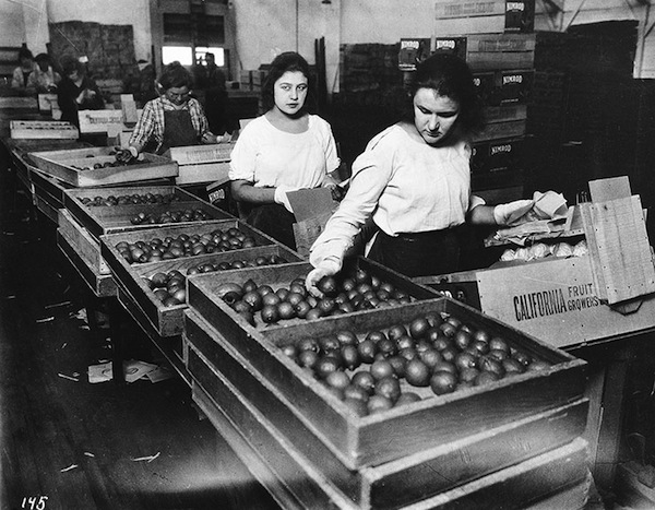 Women Packing Oranges into Crates, ca. 1925, printed later, photographer unknown