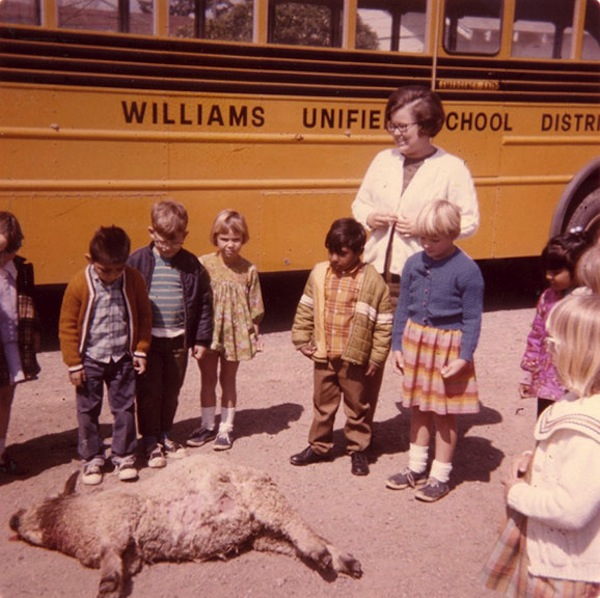 Untitled [School children looking at lamb killed by predator, Colusa County], ca. 1960, photographer unknown