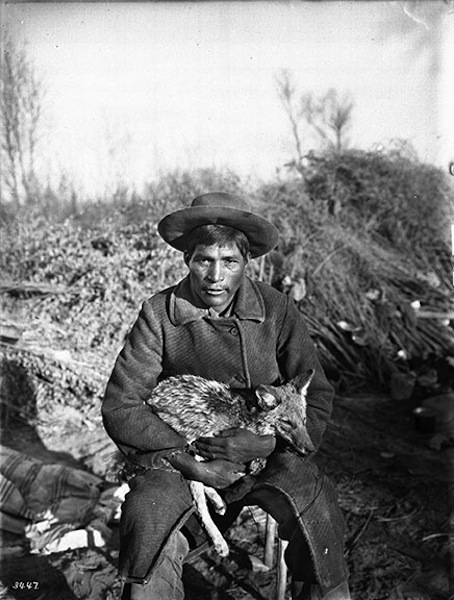 Young Chemehuevi Indian Man Holding a Coyote, ca. 1900, printed later, photographer unknown