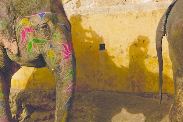 Tourist elephants at Amber Fort, Jaipur, Rajasthan.