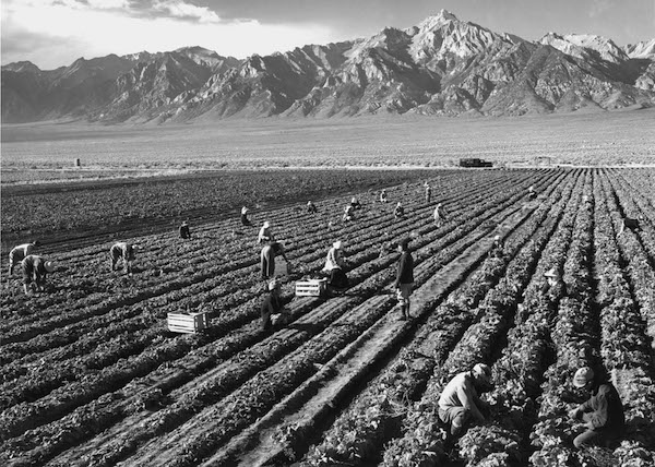 Ansel Adams, Potato Field, 1943