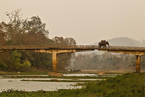 A safari elephant and its mahout cross the bridge to Kazaringa National Park, Assam.
