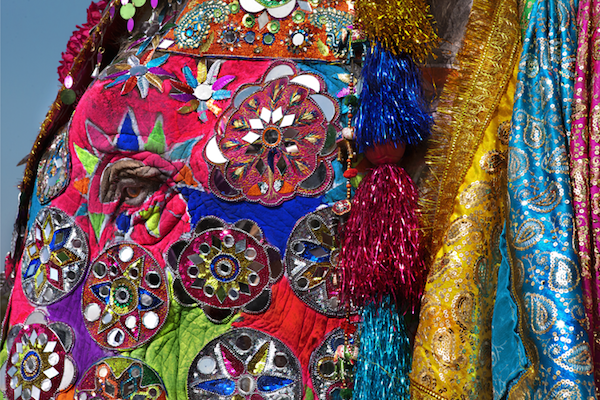 Bright paint, sequins, and fabric adorn the elephants at the Elephant Festival. Jaipur, Rajasthan.