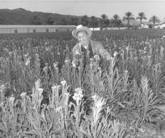 The Japanese-American Flower Growers Who Made the Desert Bloom
