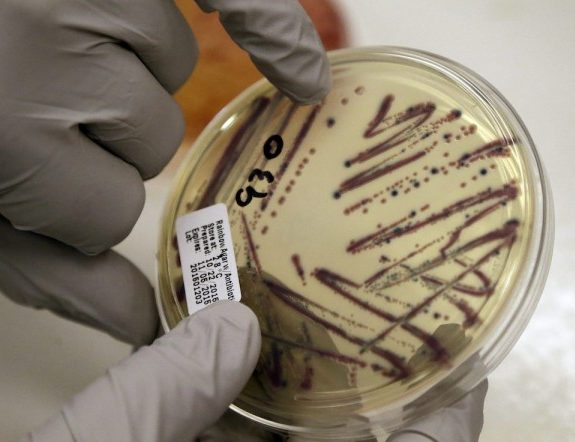 E. Coli, an Evolutionary Genius That's Giving Scientists New Superpowers