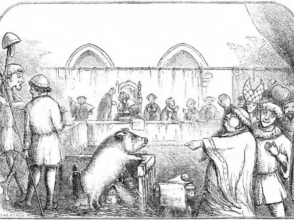 Our Current Canine Legal System's Bizarre History Is Full of Rats, Pigs, and Moles